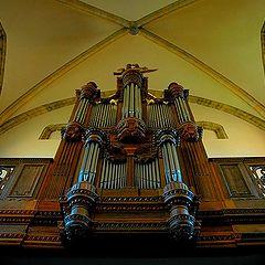 "photo ""organ"""