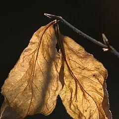 """фото """"Листья"""""""