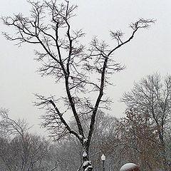 "photo ""Walks on winter capital."""
