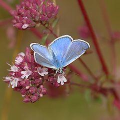 "photo ""Blue ""Flower"""""