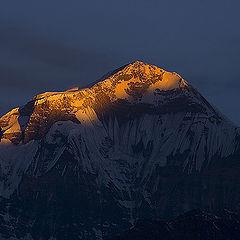 "photo ""Sunrise. Mt.Dhaulagiri"""