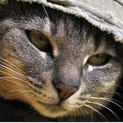 """photo """"Hat Cat"""""""