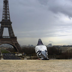 """фотоальбом """"Париж 2006"""""""