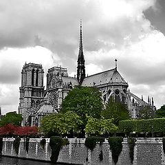 "photo ""Blossoming Paris II"""