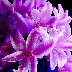 """фото """"Joey's flower"""""""