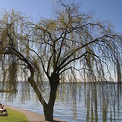 """фото """"Весна у озера"""""""