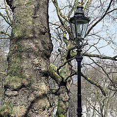 "photo ""Tree and Lantern"""