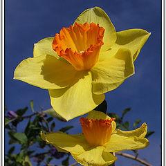 "фото ""Spring Joy"""
