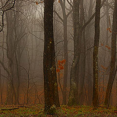 """фото """"forest tale"""""""