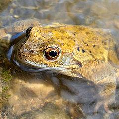 """фото """"Frog"""""""