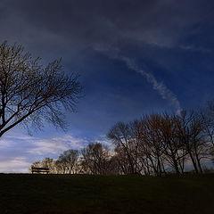 """photo """"Tree Silhouette"""""""