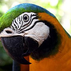 """photo """"Parrot"""""""