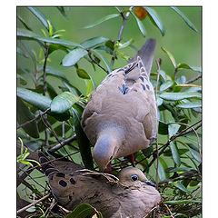"photo ""Building the Nest"""