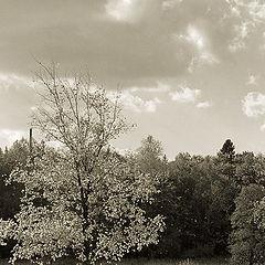 """фото """"Наблюдая за цветом осени"""""""
