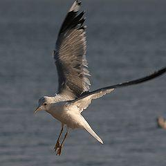 "фото ""Flight over the sea"""