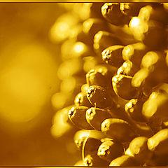 """photo """"goldene beeren"""""""