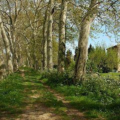 "фото ""Canal du Midi"""