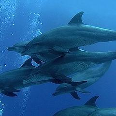 """фото """"Стайка дельфинов"""""""