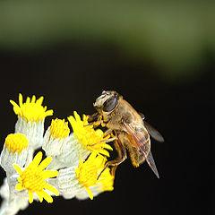 "photo ""Brundle Fly"""