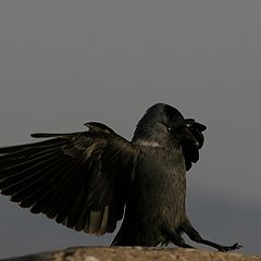 "фото ""Black Bird"""