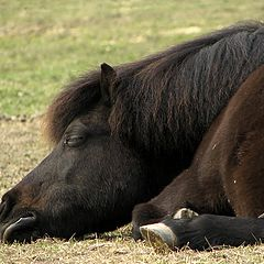 """photo """"If I take a little nap and dream about summer... Maybe the grass will be greener when I wake up?"""""""