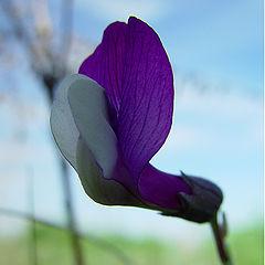 """фото """"Фиолетово"""""""