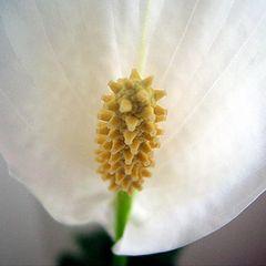 """photo """"Flower"""""""