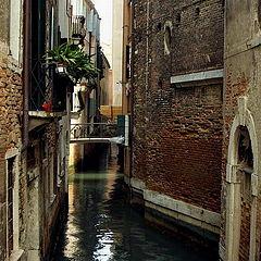 """photo """"Spring in Venice"""""""