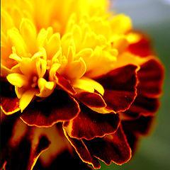 "photo ""Crimson-yellow remembrance"""