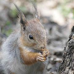 """фото """"Вкусные  орешки..."""""""