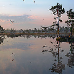 "photo ""Morning picture with islands, pines and seaguls"""