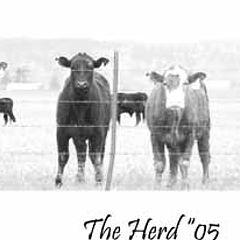 """фото """"The Herd"""""""