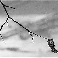 """photo """"Lonely leaf"""""""