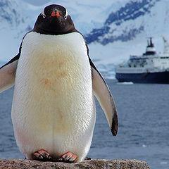 """фото """"Antarctica"""""""