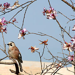 "photo ""Spring, tree in blossom, little bird"""