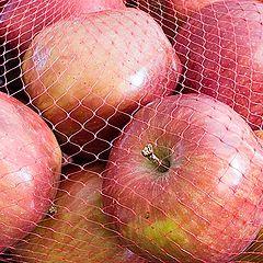 """фото """"Яблоки"""""""