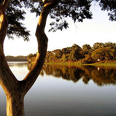 """photo """"tree at lake"""""""