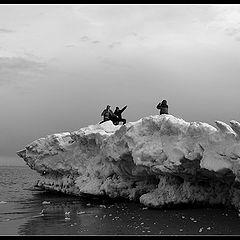 """фото """"На льдине / On the Iceberg"""""""