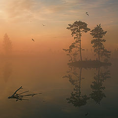 "photo ""Sunrise picture with pine island and the fog"""