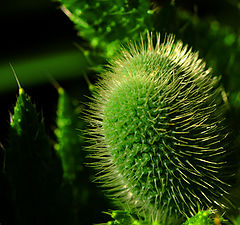"""фото """"green green"""""""