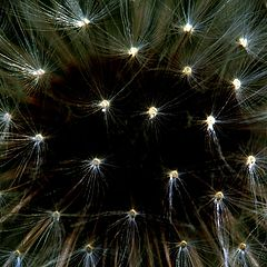"""фото """"крохотные звёзды, которые мы просто не замечаем"""""""