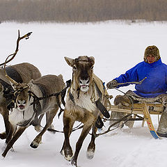 "photo ""reindeer race"""