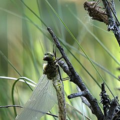 "photo ""Rebirth of dragonfly"""