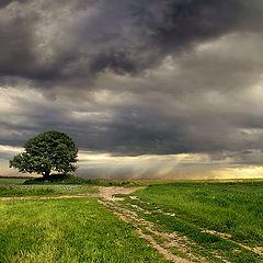 """photo """"Under heavy sky"""""""
