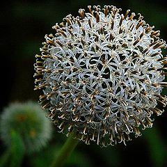 """фото """"1001 little flowers"""""""