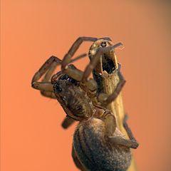 "фото ""spider#1"""