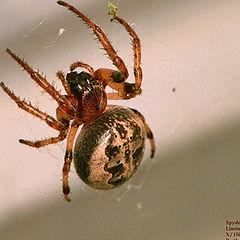 "фото ""Spider #3"""