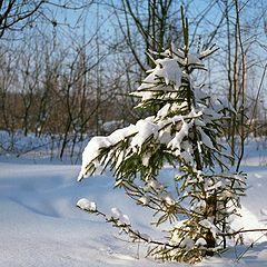 """photo """"Winter album"""""""