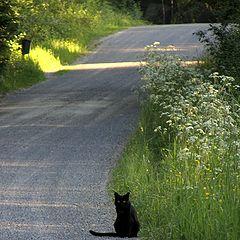 """photo """"Summercat"""""""
