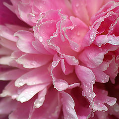 """album """"Flowers"""""""